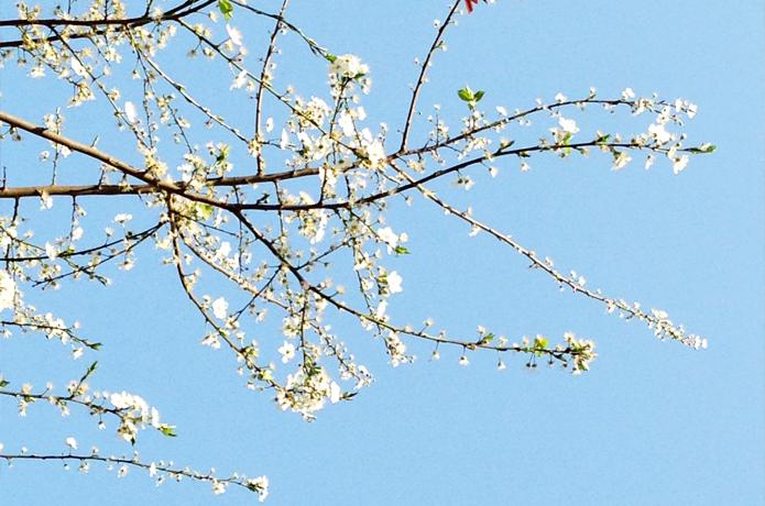 printemps_3