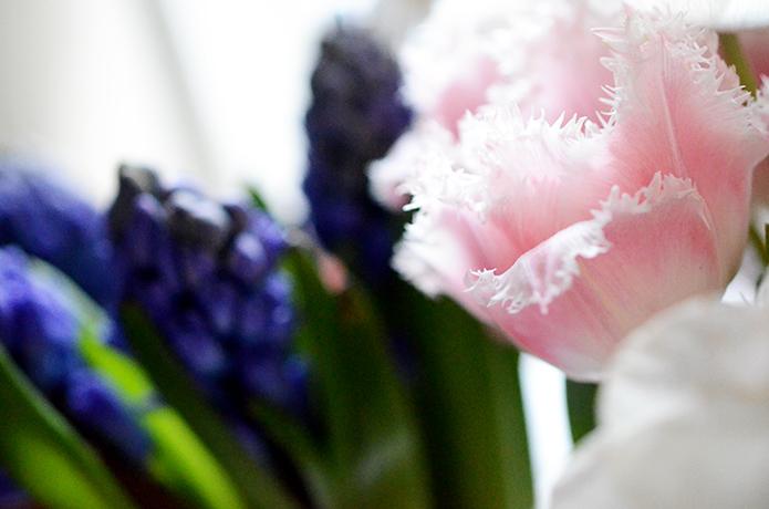 printemps_DSC_8905