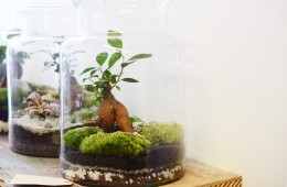 Green factory plantes paris boutique