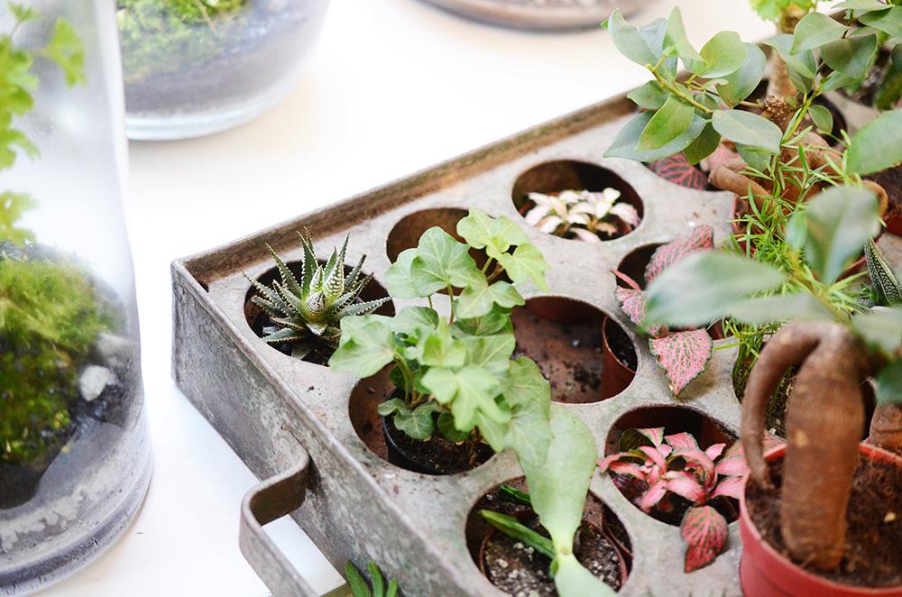 Green factory plantes paris boutique