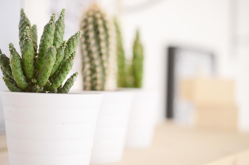 Laruze Montres Paris cactus